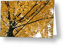 Bright Yellow Leaves Greeting Card