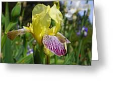 Bright Yellow Purple Iris Flower Irises Greeting Card