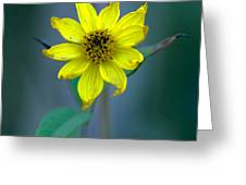 Bright Yellow Wildflower Greeting Card