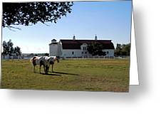 Brighton Barn And Horses Greeting Card
