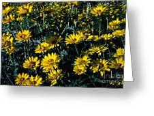 Brillant Flowers Full Of Sunshine. Greeting Card