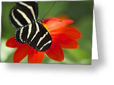 Brilliance Of Color 2047 2 Greeting Card