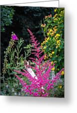 Brilliant Astilbe In Markree Castle Gardens Greeting Card