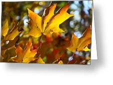 Brilliant Autumn Light And Color Greeting Card