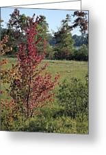 Brilliant Autumn Red Greeting Card
