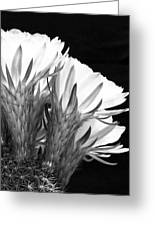 Brilliant Blossoms Diptych Right Greeting Card