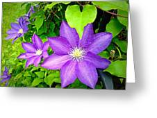 Brilliant Blue Clematis Greeting Card