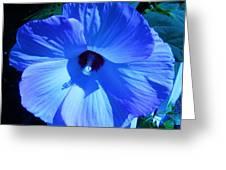 Brilliant Blue Greeting Card