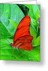 Brilliant Butterfly Greeting Card