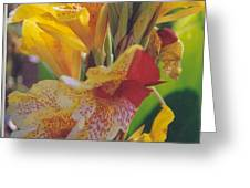 Brilliant Canna Lilies Greeting Card by Robert Bray
