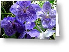 Brilliant Checkerboard Purple Orchid Greeting Card