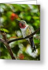 Brilliant Color Of The Ruby-throated Hummingbird Greeting Card