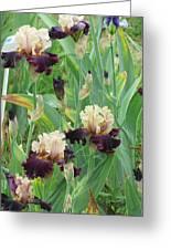 Brilliant Disguise Iris Greeting Card