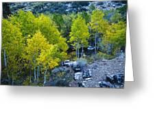 Brilliant Fall Color Greeting Card