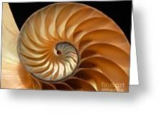Brilliant Nautilus Greeting Card
