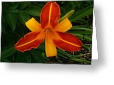 Brilliant Orange Lily Greeting Card