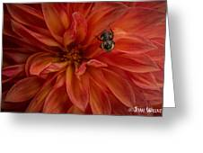 Brilliant Red Dahlia Greeting Card