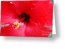 Brilliant Red Hibiscus Greeting Card