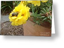 Brilliant Rose Flower With Buzzy Bee Greeting Card