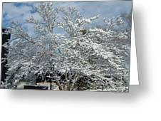 Brilliant Snow Coated Tree Greeting Card