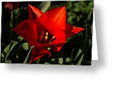 Brilliant Spring Sunshine In Red  Greeting Card