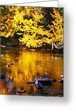 Brilliant Yellows Greeting Card
