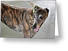 Brindle Greyhound Dog Usa Greeting Card