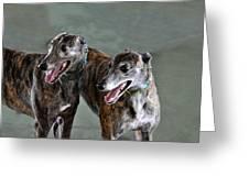 Brindle Greyhound Dogs Usa Greeting Card