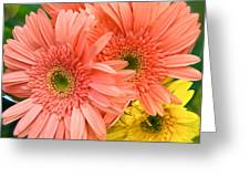 Bringing A Smile Greeting Card