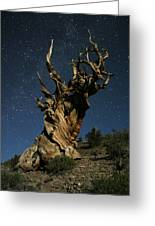Bristlecone By Moonlight Greeting Card by Karen Lindquist