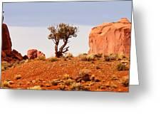 Bristlecone Pine Greeting Card