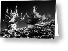 Bristlecone Twins In Infrared Greeting Card