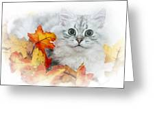 British Longhair Cat Greeting Card