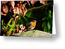 British Nature Greeting Card