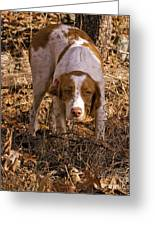 Brittany Spaniel Pixel's Pointed Woodcock Greeting Card