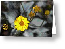 Brittle Bush Flowers In December Greeting Card