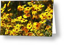 Brittle Bush In Bloom  Greeting Card