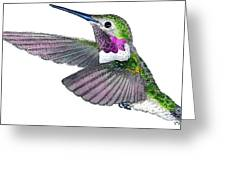 Broad-tailed Hummingbird Greeting Card