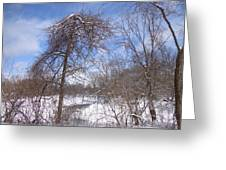 Broken Tree Greeting Card