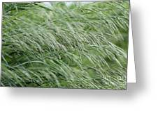 Brome Grass In The Hay Field Greeting Card