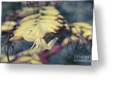 Bromeliaceae - Alcantarea Geniculata Greeting Card