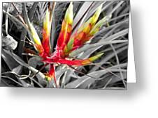 Bromeliad 1 Greeting Card