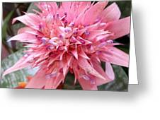 Bromeliad Close Up Pink Greeting Card