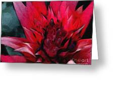 Bromeliad Splendor Greeting Card