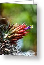 Bromeliad Strica Greeting Card