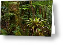 Bromeliads Of The Clouds Greeting Card