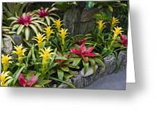 Bromeliads Greeting Card
