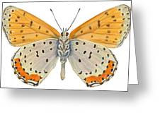 Bronze Copper Butterfly Greeting Card