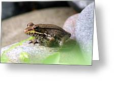 Bronze Frog Greeting Card