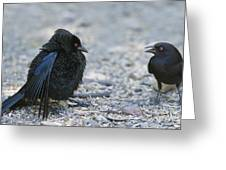 Bronzed Cowbird Display Greeting Card
